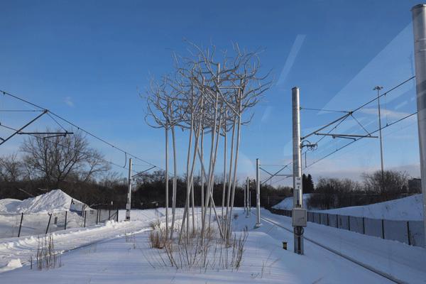 Photo of Stand of Birch by Don Maynard