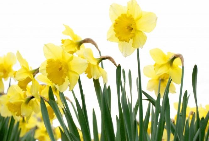 Spring service change starts Apr. 21